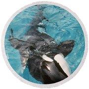 Skana Orca Vancouver Aquarium Pat Hathaway Photo1974 Round Beach Towel