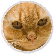 Skc 1483 Unconcerned Stare Round Beach Towel