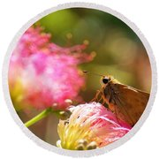 Skipper Butterfly On Mimosa Flower Round Beach Towel