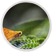 Skipper Butterfly On Mimosa Leaf Round Beach Towel