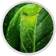 Skunk Cabbage Round Beach Towel