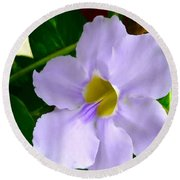 Sky Flower Or Clock Vine Round Beach Towel