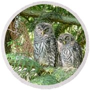 Sleeping Barred Owlets Round Beach Towel by Jennie Marie Schell