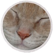 Sleeping Cat Face Closeup Round Beach Towel
