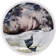 Sleeping Hippo Round Beach Towel