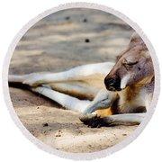Sleeping Kangaroo Round Beach Towel