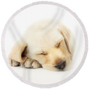 Sleeping Labrador Puppy Round Beach Towel by Johan Swanepoel