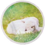 Sleeping Lamb Green Hue Round Beach Towel