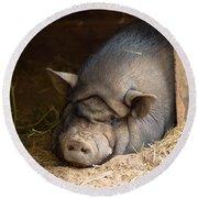 Sleeping Pig Round Beach Towel