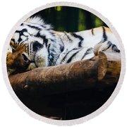 Sleeping Tiger Round Beach Towel