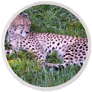 Sleepy Cheetah Round Beach Towel