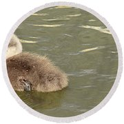 Sleepy Cygnet Round Beach Towel