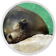 Sleepy Seal Round Beach Towel