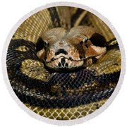 Sleepy Snake Round Beach Towel