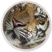 Sleepy Tiger Portrait Round Beach Towel