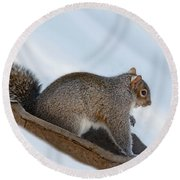 Sliding Squirrel Round Beach Towel