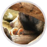Sloth Bear Round Beach Towel
