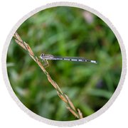 Small Blue Dragonfly Round Beach Towel