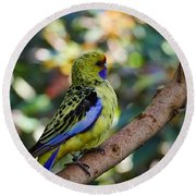 Small Parrot Round Beach Towel