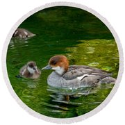 Smew With Ducklings Round Beach Towel