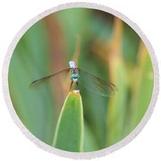 Smiling Dragonfly Round Beach Towel