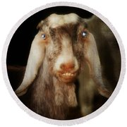 Smiling Egyptian Goat I Round Beach Towel