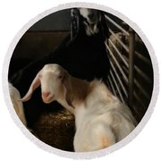 Smiling Goats  Round Beach Towel