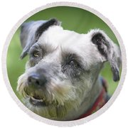 Smiling Schnauzer Round Beach Towel