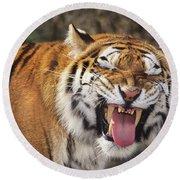 Smiling Tiger Endangered Species Wildlife Rescue Round Beach Towel