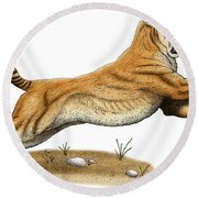 Smilodon Saber-toothed Tiger Round Beach Towel