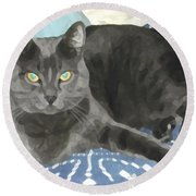 Smokey On A Blue Blanket Round Beach Towel