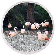 Smudgestick Flamingos Round Beach Towel