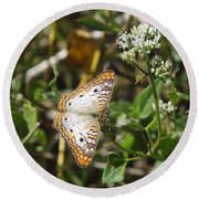 Snack For A White Peacock Butterfly Round Beach Towel
