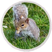 Snack Time For Squirrels Round Beach Towel