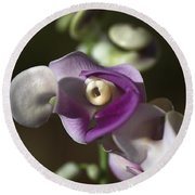 Snail Flower In The Spot Light Round Beach Towel
