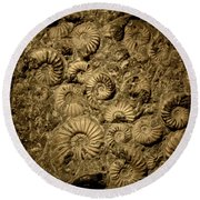 Snail Fossil Round Beach Towel