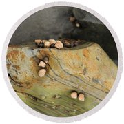 Snails Converge Round Beach Towel
