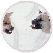 Snarling Huskies Round Beach Towel