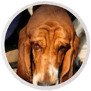 Sniffer Round Beach Towel