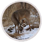 Sniffing Stag Round Beach Towel