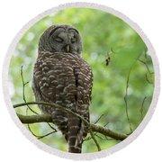 Snooze Time - Owl Round Beach Towel