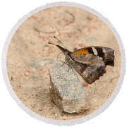 Snout Butterfly  Round Beach Towel