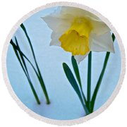 Snow-capped Daffodil On May 21 Near Des Chutes National Forest-or  Round Beach Towel