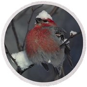 Snow Covered Pine Grosbeak Round Beach Towel