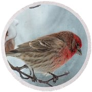 Snow Day Housefinch With Texture Round Beach Towel