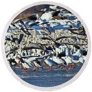 Snow Geese Round Beach Towel