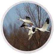Snow Geese In Flight Round Beach Towel