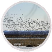 Snow Geese Taking Off At  Loess Bluffs National Wildlife Refuge Round Beach Towel