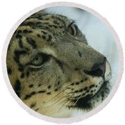 Snow Leopard 2 Round Beach Towel