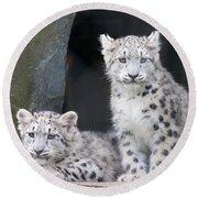 Snow Leopard Cubs Round Beach Towel